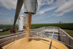 A farmer loads soybeans from his grain bin onto a truck before taking them to a grain elevator in Dwight, Illinois, on June 13, 2018.