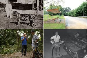 Clockwise from top left: Mr W.L.S. Basapa with his pet Bengal tiger Apay; the old bus stop, where bus services 82 and 83 once plied; Mr Lee Ah Tee showing off a 1.8m crocodile in 1983; and Mr Peh Eng Choon (left) and his friend Lim Cheng Meng taking
