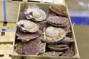 Scallops on display at the fresh fish and seafood pavilion of the Rungis international food market in Rungison, on Nov 19, 2015.
