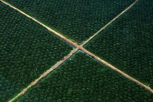 A file photo taken on Oct 16, 2010, shows an aerial view of a palm oil plantation in Indonesia's South Sumatra province.