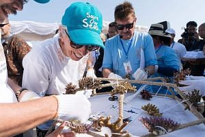 International Monetary Fund (IMF) managing director Christine Lagarde participating in an activity using coral fragments to help rehabilitate threatened coral reefs in Nusa Dua, Bali, yesterday. The annual meeting of the IMF and World Bank will be he