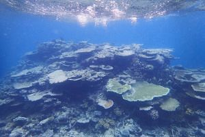 A mostly dead patch of coral seen in one of the outer reefs on the outskirts of Port Douglas in Queensland, on May 8, 2018.