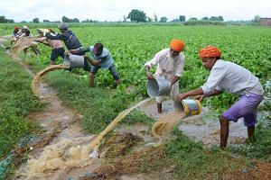 Indian farm labourers remove working on the outskirts of Amritsar, north-western India. The authorities have asked farmers not to torch fields to prepare them for the next crop.