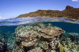The coral reefs in Raja Ampat, Indonesia, stayed in the pink of health even while El Nino caused those elsewhere to die. Scientists hypothesise that Raja Ampat's reefs are pre-adapted to climate change and more resilient.