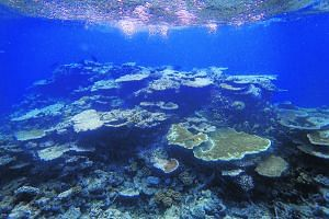 Corals, mostly dead with a few patches of live ones, in one of the outer reefs off Port Douglas in Queensland in May. Climate change is now the No. 1 threat to reefs around the world, many of which have already been damaged from water pollution, over