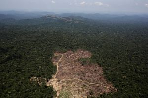 An aerial view of a tract of Amazon jungle recently cleared by loggers and farmers near the city of Novo Progresso, Brazil, on Sept 22, 2013.