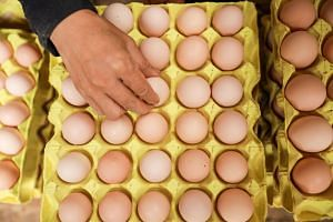 Malaysia's egg supply fell about 3 per cent in December 2018 after a few farms in the north of the country were investigated for avian flu, according to the Veterinary Services Department.