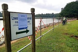 Designated fishing grounds at Lower Peirce Reservoir and Upper Seletar Reservoir will be closed until further notice, national water agency PUB said. The move comes after motoro stingrays were spotted recently. The animals may have been released into