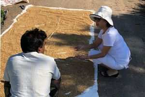 Mrs Cynthia Wee-Hoefer planted the first batch of heirloom rice in late October at her farm in Illuketia, Sri Lanka, and hopes to harvest about 1,000kg of milled rice by next month.