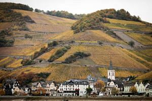 Vineyards in Assmannshausen, in southwest Germany, May 31, 2018. The hottest, driest spring and summer on record was a blessing for German winemakers, who are now counting 2018 as one of the best vintages on record.