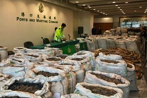 Ivory tusks and pangolin scales seized by Hong Kong Customs are seen at a news conference in Hong Kong, China on Feb 1, 2019.
