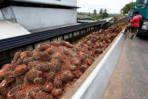 A worker unloads palm oil fruit bunches from a lorry inside a palm oil mill in Bahau, Negeri Sembilan, Malaysia on Jan 30, 2019.