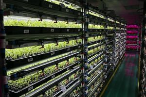 Panasonic's indoor vegetable farm, which uses an intelligent lighting system, is located in Jalan Ahmad Ibrahim. Technologies such as indoor multi-storey LED lighting for vegetable farms and indoor multi-storey recirculating aquaculture systems can p