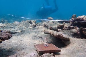 A tile placed on the Great Barrier Reef's badly bleached northern section. Scientists count the number of young corals that attach themselves to the tiles to gauge the reef's recovery.