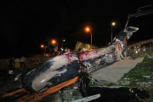 Female sperm whale Jubi Lee's carcass at Tuas Marine Transfer Station, on July 10, 2015. Scientists learnt that Jubi had likely hailed from a pod in the Indian Ocean.