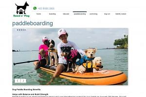 A screen grab of pet boarding and daycare company Board N' Play's website. Ms Naida Ginnane said that Garfield, a one-year-old Maltese, had slipped off a paddle board, but the company denied this. PHOTO: BOARDNPLAY. COM/PADDLEBOARDING