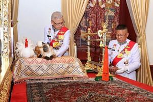 Thai officials placing a white rooster and Siamese cat on a pillow as part of a housewarming ritual, in relation to the coronation of Thailand's King Maha Vajiralongkorn, at the Chakrapat Biman Royal Residence in the Grand Palace in Bangkok on May 4,