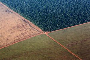 The Amazon rain forest, bordered by deforested land prepared for the planting of soybeans, in this aerial photo taken over Mato Grosso state in western Brazil.