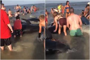 Nine pilot whales stranded themselves in the surf and while rescuers were able to push six back into deeper water, three perished, according to the Georgia's Department of Natural Resources.