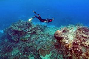 The Great Barrier Reef Marine Park Authority said that current gas emission trends, if not curbed, could see the deadly bleaching events happen twice per decade by around 2035 and they could become annual before the middle of the century.