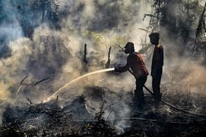 Firefighters extinguishing a fire at a peat land forest in Payung Sekaki regency in Pekanbaru, Riau province, on Aug 2, 2019.