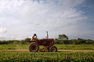 China imported US$9.1 billion (S$12.6 billion) of US farm produce in 2018 - mainly soybeans, dairy, sorghum and pork - down from US$19.5 billion in 2017, according to the American Farm Bureau.