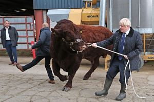 A plainclothes police officer knocked backwards as British Prime Minister Boris Johnson tried to steer a bull during a visit to Darnford Farm in Banchory near Aberdeen in Scotland yesterday. Mr Johnson was there to announce an increase in funding for