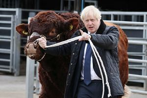 Boris Johnson visits a farm in Scotland on Sept 6, 2019.