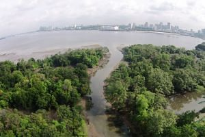 The Mandai Mangrove and Mudflat in a photo taken on Oct 7, 2018. Minister for the Environment and Water Resources Masagos Zulkifli said hard and soft engineering approaches are needed to restore mangrove areas.