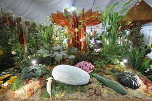 Some of the winners of the Community Garden Edibles Competition on display at the festival, including a winter melon weighing 24.06kg, a pumpkin weighing 5.9kg and a cabbage weighing 2.24kg.