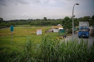 The land (left) set aside for bean-sprout farming in Sungei Tengah Road.