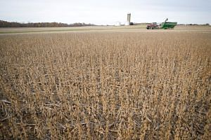 "A soybean field in Roachdale, Indiana. China has said it will offer a tariff waiver to ""some"" imports of US soybean and pork."