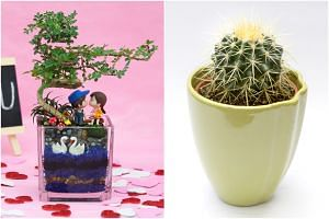 As a gift, bonsai reflects a lover's commitment to a long-lasting and blissful relationship, while cacti are the perfect gift for prickly paramours.