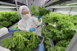 In 2019, local farms produced 14 per cent of leafy vegetables consumed here.