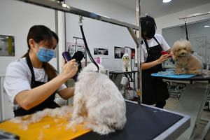 Ms Phoebe Chin and Ms June Tan grooming dogs at June's Pet House on June 2, 2020.