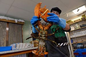 An employee picks up a lobster at Ipswich Shellfish in Massachusetts, on March 26, 2020.
