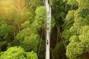 Walk among the treetops on the canopy walk at Ulu Temburong National Park in Brunei.