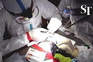 Researchers study bats to track Covid-19 origins