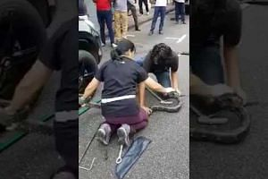 A man and woman extracting a python from a car