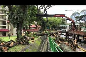 Fallen tree near junction of Toa Payoh East and Toa Payoh Lor 6