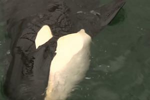Russia's 'whale prisoners' to be freed