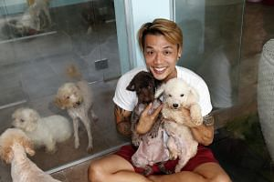 Voices for Animals president Derrick Tan with some of the rescued dogs at a temporary boarding facility in Bukit Timah. The 18 dogs were left in various places on Wednesday and Thursday last week, such as an industrial park in Yishun, and in Tampines