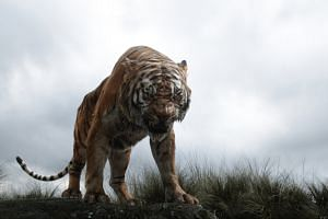 Tiger Shere Khan, voiced by Idris Elba, threatens the boy Mowgli in the film, The Jungle Book.