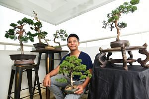 Mr Mas Kamalludin (above) says his six bonsai, displayed outside his Yishun flat, are great conversation starters with neighbours, flyer distributors and door-to-door salespeople. His collection includes a $3,000 70-year-old kishu juniper (second fro