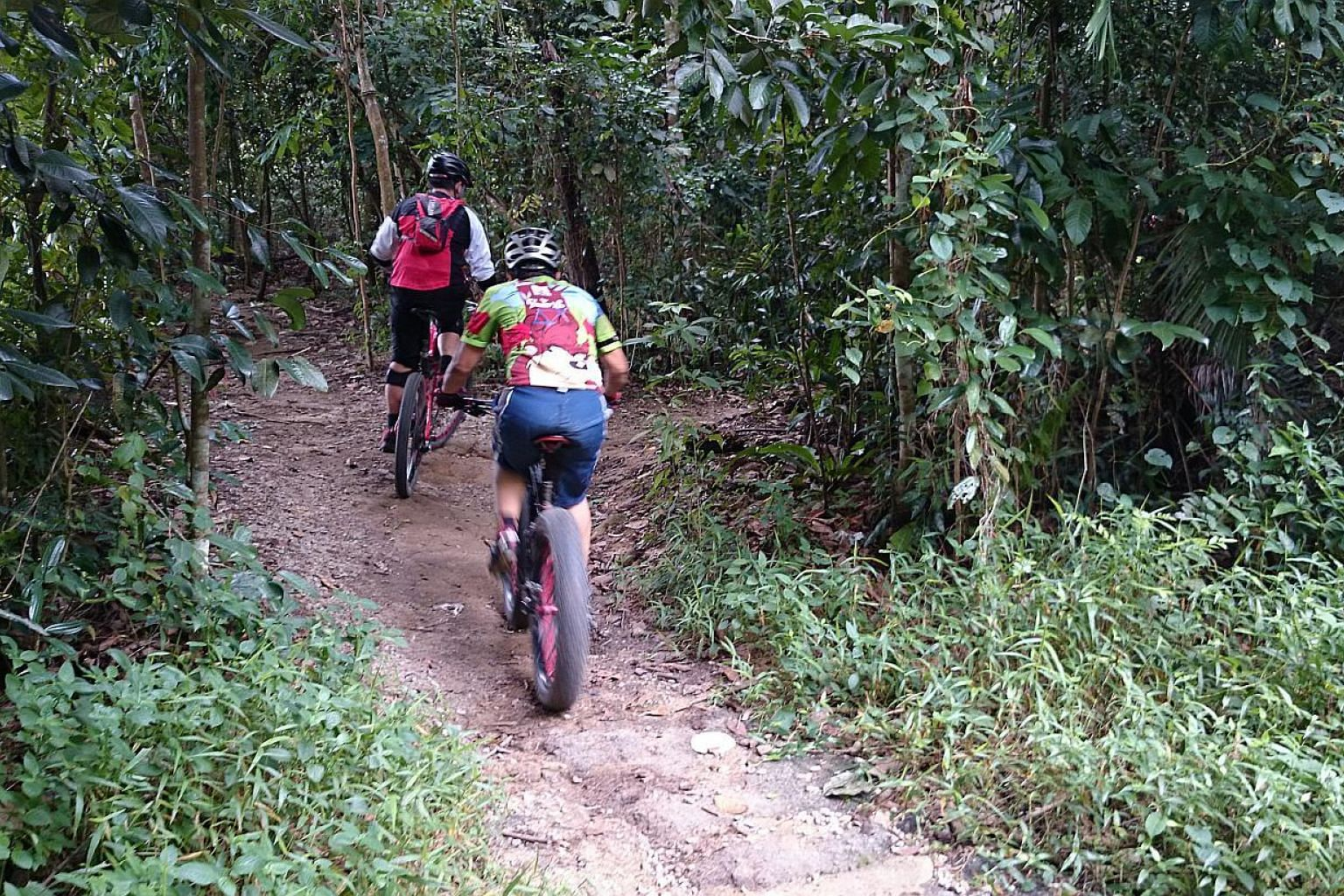 Mountain bikers have been riding on the 3km-long Butterfly trail for years. But the trail, which is located off Chestnut Avenue in the Central Catchment Nature Reserve, is likely to be closed permanently because of the construction of Chestnut Nature