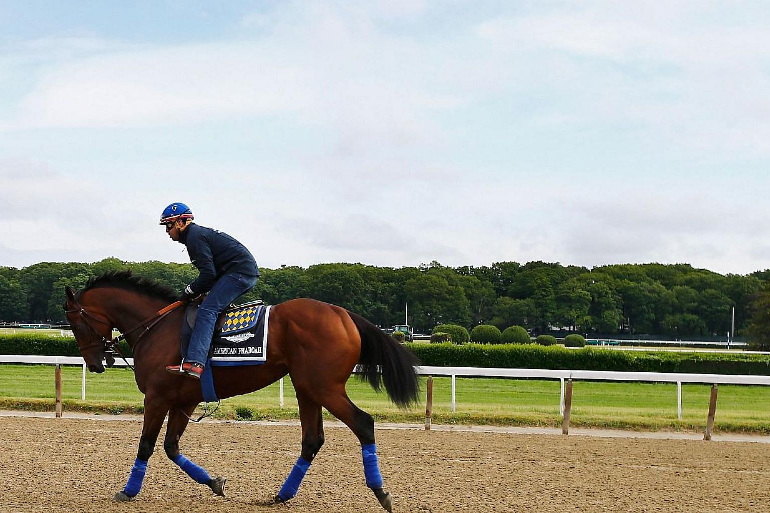 American Pharoah during training at Belmont Park on June 3, 2015, in Elmont, New York. -- PHOTO: AFP