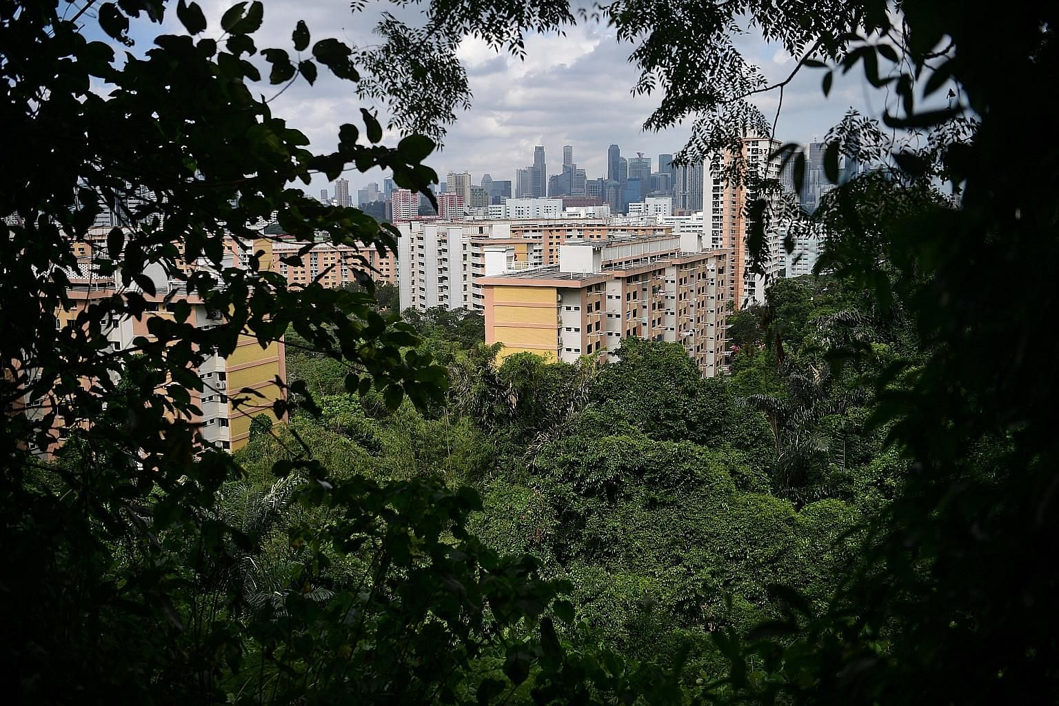 As this view from Mount Faber shows, residents are never too far from green lungs while the authorities have also ramped up the drive to get property developers to go green, by creating roof gardens for example.