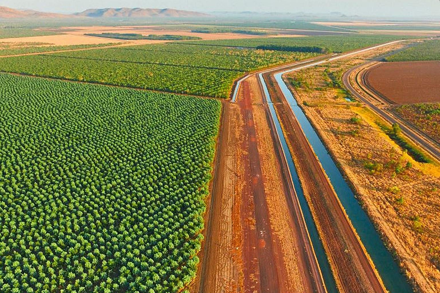 TFS plans to raise sandalwood output thirtyfold to 10,000 tonnes of timber a year from its 12,000ha of plantations in northern Australia, including a large plantation area in Kununurra (above).