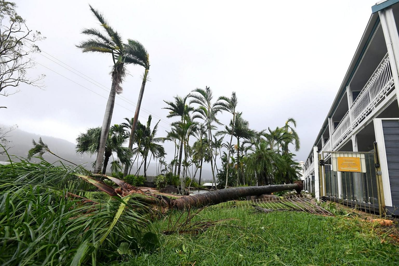 A fallen tree lying near a motel at Airlie Beach, located south of Townsville city, Queensland. The cyclone that hit the region is expected to cause more than a billion dollars' worth of damage.