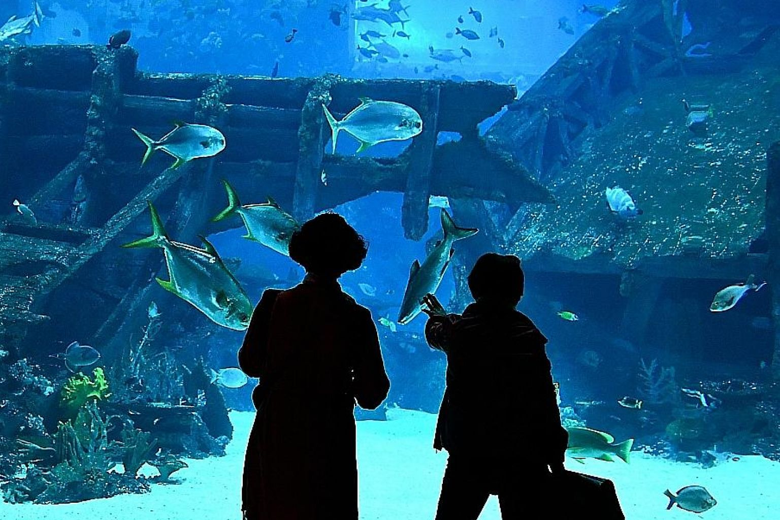Genting Singapore said its SEA Aquarium saw its 10th millionth visitor during the first quarter. Meanwhile, Universal Studios Singapore received its 25 millionth visitor.